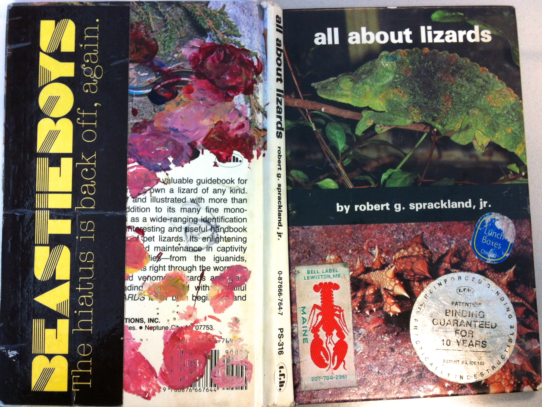 all about lizards